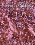 Search for Associate Editors of Veterinary Pathology