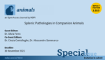 Special Issue of Animals: Splenic Pathologies in Companion Animals
